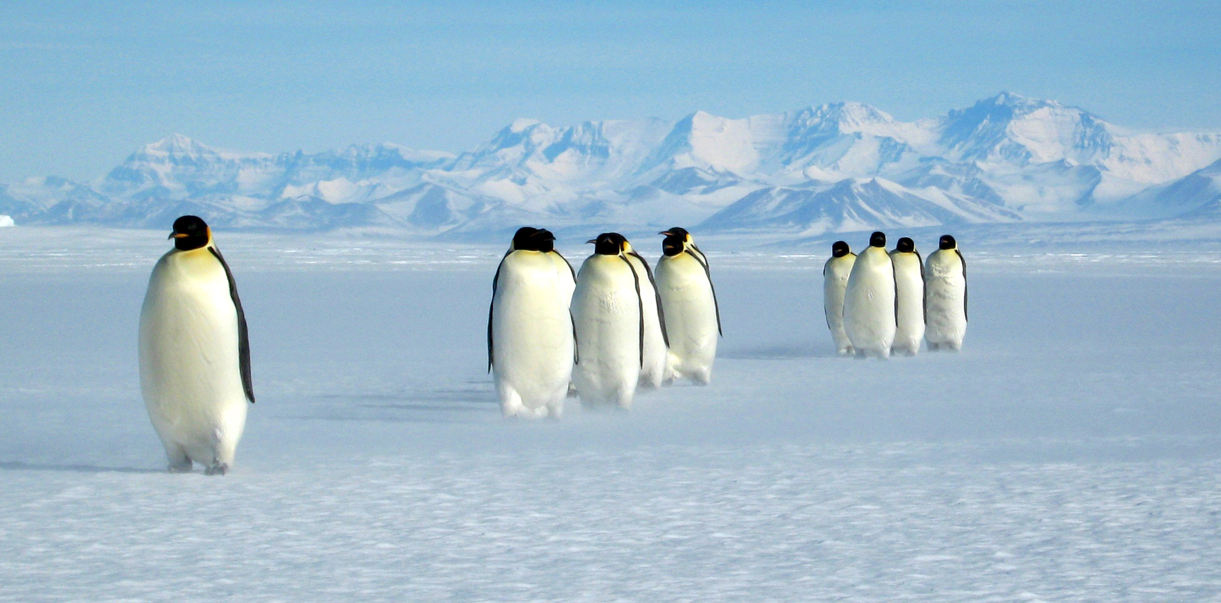 Group of penguins in Antarctica