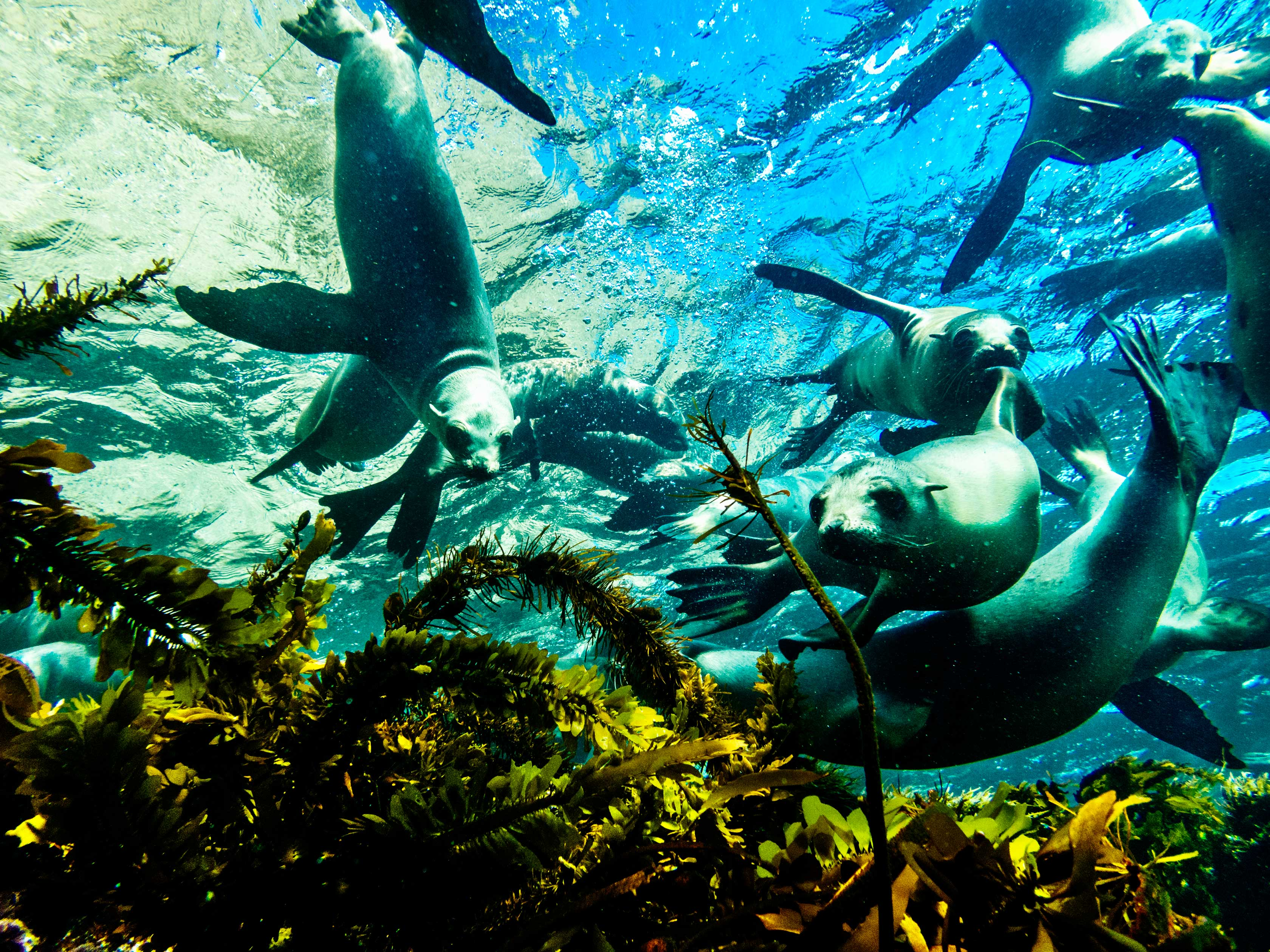Group of sea lions playing