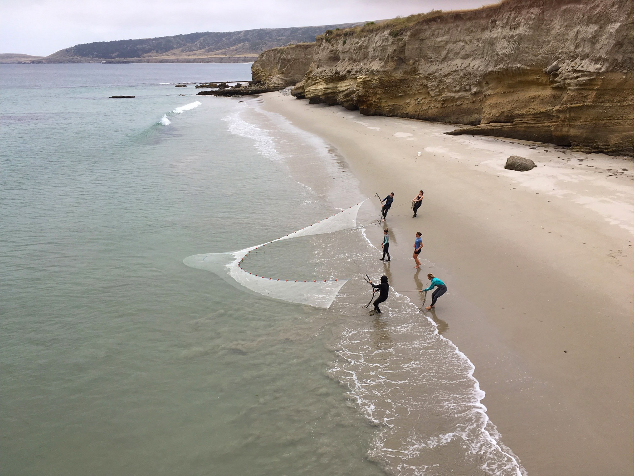 Student researchers seining at Surf Beach
